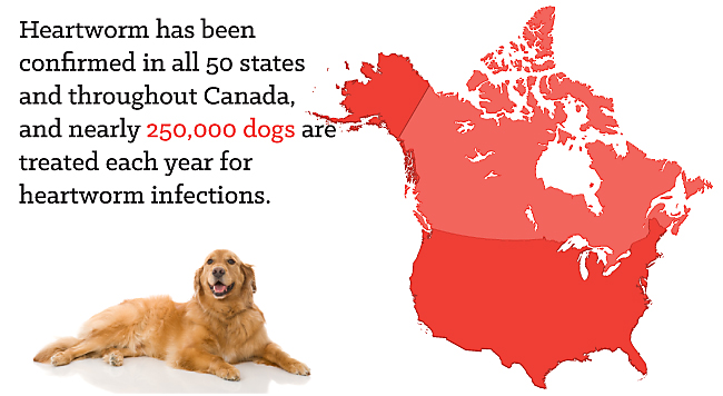 Heartworm in the US & Canada