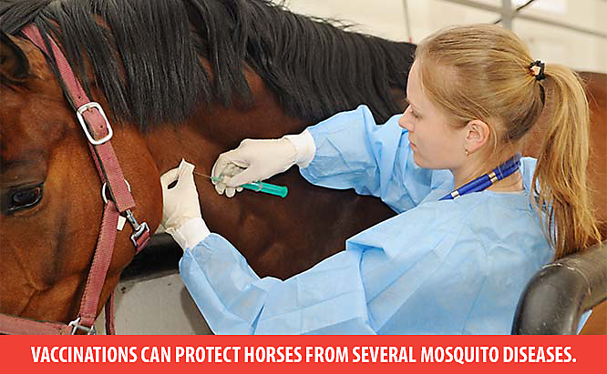 mosquito vaccines for horses