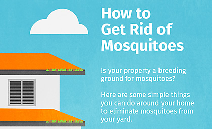 How to get rid of mosquitoes in backyard outdoor goods Ways to get rid of mosquitoes in your house