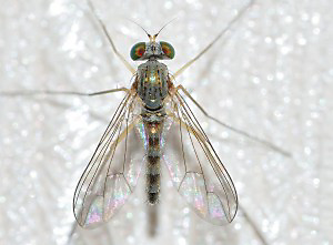 insects-689247_1280