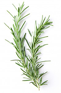 scents that repel mosquitoes rosemary