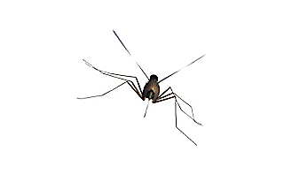 Learn about Mosquitoes, No-See-Ums & Biting Flies