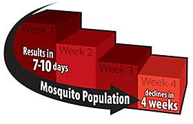 Mosquito Population