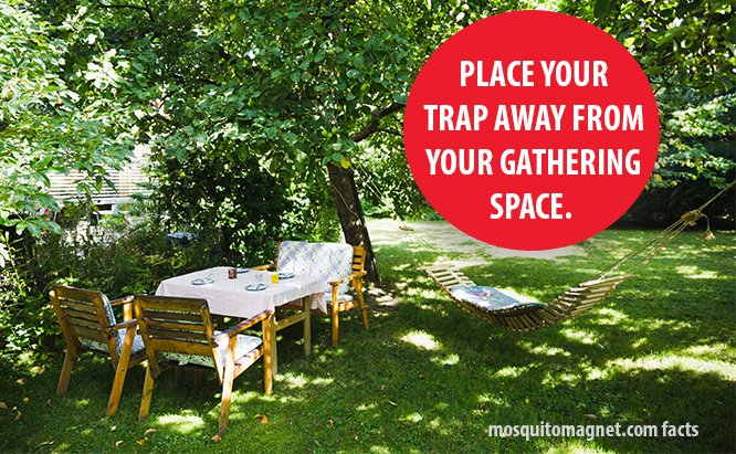Place Your Trap away from your gathering space