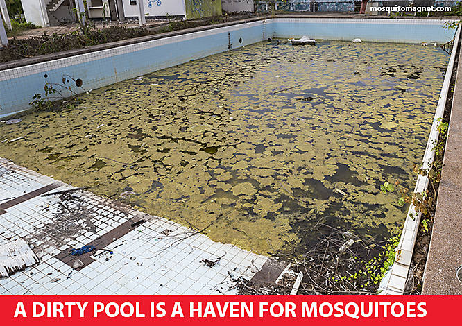 neighbors dirty pool mosquito problems