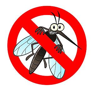 No mosquitos!