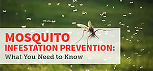 Prevent Infestations