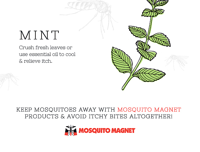 How to Relieve Mosquito Bite Itch Naturally