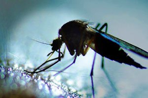 West Nile Worries