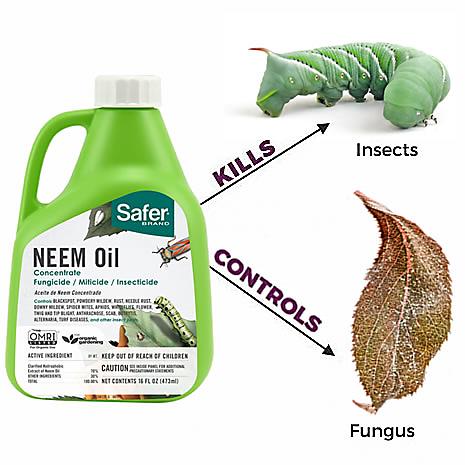Safer® Brand Neem Oil Concentrate 16 oz | 5182-6 | saferbrand com