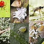 Pests inside your home