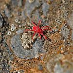 Destroy Spider Mites