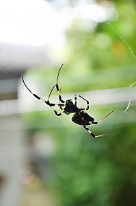 spider-213180_1280