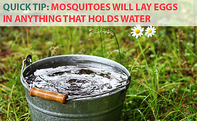 Mosquito Magnet tips - Eliminate standing water