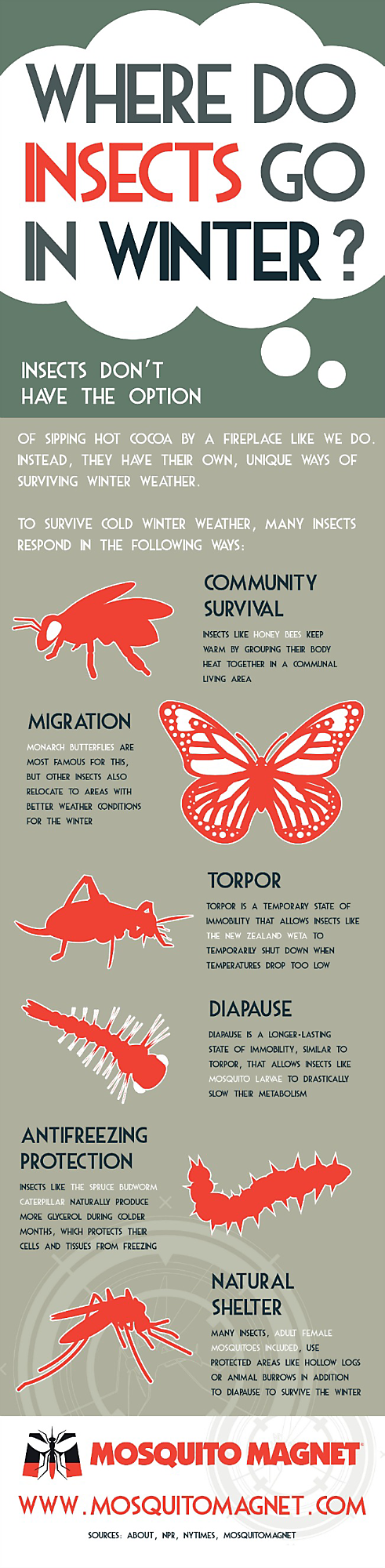 Mosquito Magnet graphic - Where do insects go in winter?