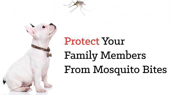 Mosquito Protection For Dogs & Cats