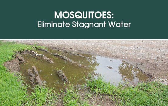 Mosquitoes: Eliminate Stagnant Water