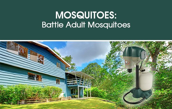Mosquitoes: Battle Adult Mosquitoes