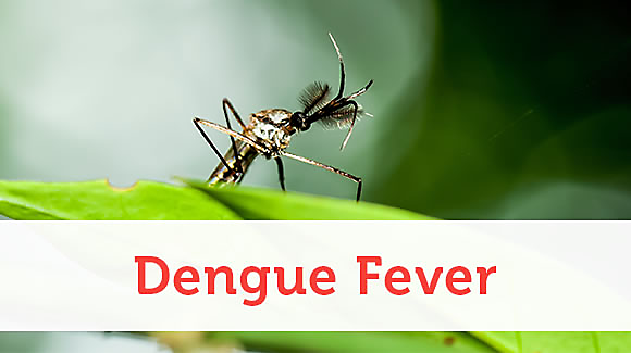 What is Dengue and What is its treatment?