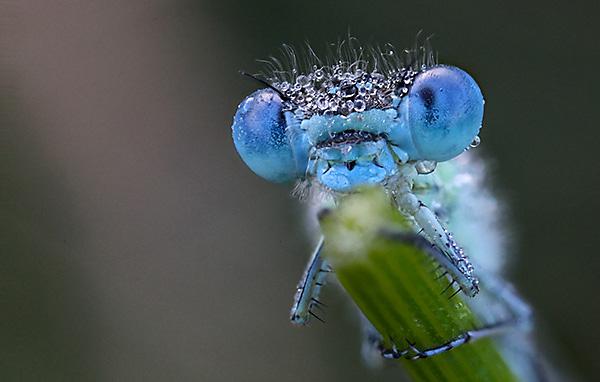 Con gì ăn muỗi, chuồn chuồn ăn muỗi