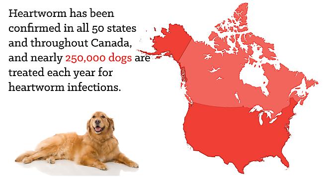 Giun tim ở Hoa Kỳ và Canada