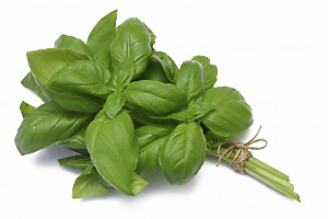 scents that repel mosquitoes basil