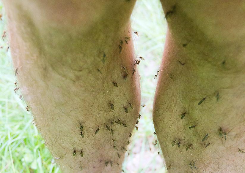Tại sao muỗi bị thu hút bởi tôi