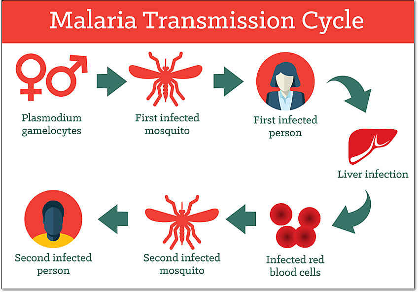 how is malaria disease transmitted