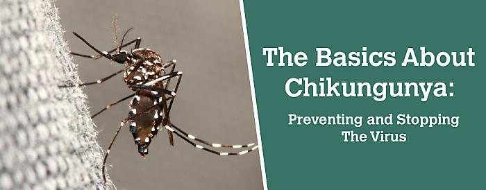 Chikungunya là gì
