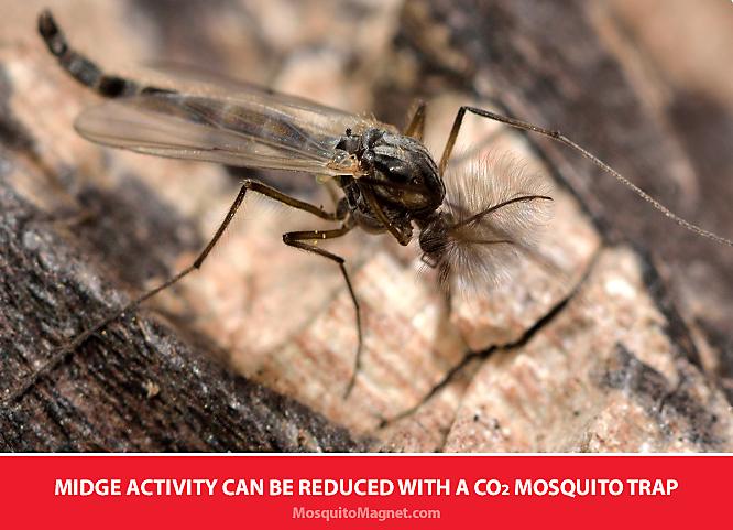 Sự thật về Muỗi vằn: Cách thoát khỏi Muỗi vằn