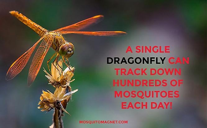 côn trùng diệt muỗi hàng đầu