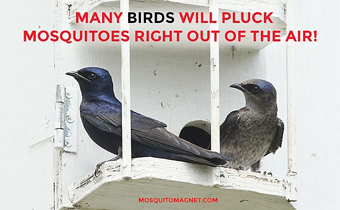 chim và dơi diệt muỗi hàng đầu